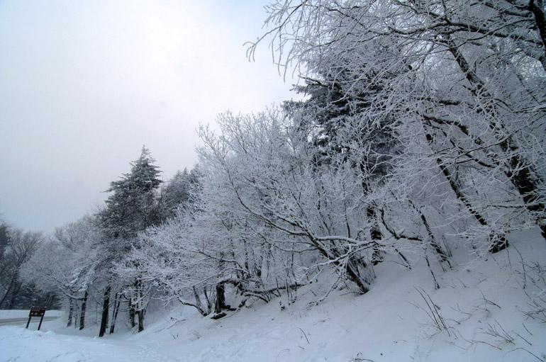 web_snow_roadsign_0321_2478