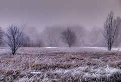 Across A Misty Field I See (JeremyT) Tags: winter fog river colorado frost fortcollins frontpage hdr cachelapoudre