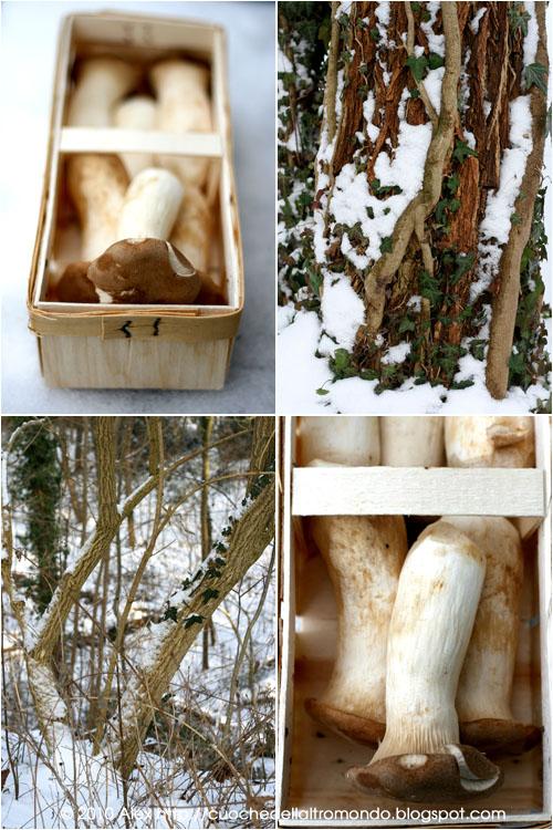 Funghi e bosco