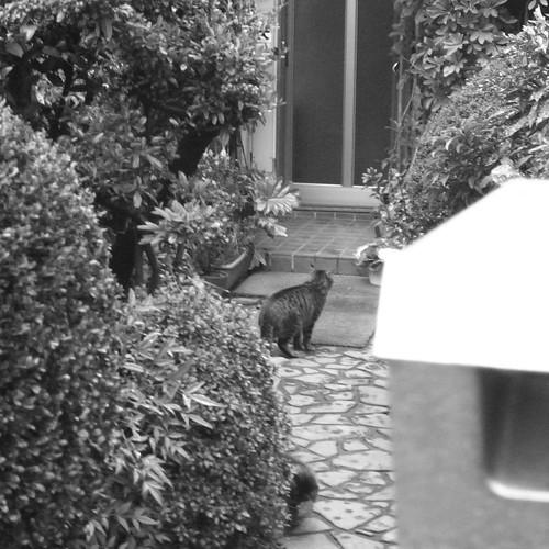Today's Cat@2010-02-01