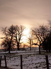 Landscape #43 (vanessa weber) Tags: winter snow silhouette germany landscape bavaria 100photos