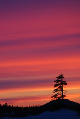 The End of Yesterday (WanderWorks) Tags: winter sunset sun color colour tree clouds newfoundland day dusk horizon dsc8855