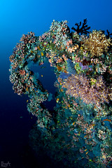 Over the Rainbow (Lea's UW Photography) Tags: underwater maldives fins malediven unterwasser tokina1017mm leamoser