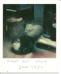 Ghost cat Adolp and Momma cat