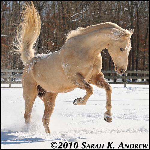 More Horse Snow Photos Rock And Racehorses The Blog