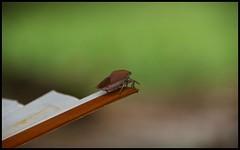 Ready for take-off (Brian Nordlund) Tags: macro animal bug asia pentax tomb vietnam fantasy hue emperor tuduc tomboftuduc k10d stockcategories tamronaf18250mmf3563diiildasphericalifmacro