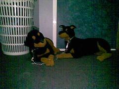 poor stuffed dogs (teddyman1) Tags: up animals stuffed tied
