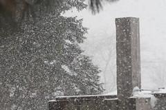 Snow Studies 1