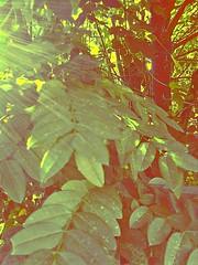 (Franco Rostan | Fotografa) Tags: new light sky naturaleza color reflection tree art textura love luz sol argentina colors photography luces photo google nikon flickr raw day foto tour photos earth top live sony dia colores explore vida desenfoque contraste perspectiva jpg 365 geo da nueva mundo placer fotgrafo talento franco reflejos 2010 lapampa fotografa planeta cmara encuadre habilidad enfoque explored rostan i365 nitides francorostan geoticacion