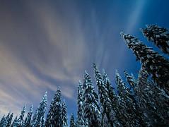 Night Sky (L.Mikonranta) Tags: longexposure trees winter sky nature night clouds canon finland stars eos big shot nightshot wideangle 7d usm spruce jyvskyl efs 1022mm 1022 bigdipper dipper canonefs1022mmf3545usm f3545 canoneos7d ladunmaja copyrightlm