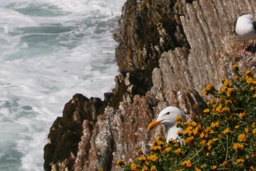 crouching seagull hidden seagull (detail)