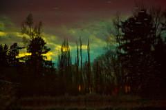 Sunset Reflection on Lake Washington (Inverted) (Preconscious Eye) Tags: trees sunset lake reflection water twilight ethereal