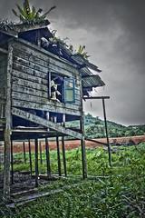 house 1 (ami lan) Tags: old people house green broken window demolish human abandon lama hdr kuching rumah pasir claudy seram mlue pandak hdraward