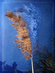... blue ... (UBU ♛) Tags: blue blu bluescreenofdeath blues bleu dreams blau bluemoon emozioni blus bluey lanotte blueribbonwinner effettonotte feelinblue blunotte blunote bludiprussia blucobalto bluklein blueklein bluoltremare blupavone bludipersia blureale bluindaco blucartadazucchero bluacquamarina blupervinca blufioredigranoturco bludodger bluacciaio bludeminchiaro blubondi bluunastellatuttamia blufemmenaro blualice blupolvere bluchiaro bluceruleo blumarino bluzaffiro bluacqua blucadetto ©ubu blutristezza unamusicaintesta blurassegnazione blusolitudine landscapeinblues bluubu blugardenia blustyx blumelancolia bluusato blunapoli