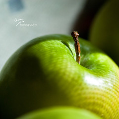 green light (kellysauer) Tags: sunlight macro green apple closeup fruit morninglight apples fruitbowl watermarked throughthescreen pioneerwomanphotographyassignment