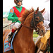Animal Kingdom and John Velazquez