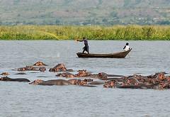 Hippo Fishing, Murchison Falls NP, Uganda