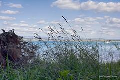Parco Cimino - Nikon D750 (NIKOZAR (Nicola Zaratta)) Tags: nikon nikond750 mare taranto parcocimino puglia maredinverno firstshot nikon50mm14g pineta parco italia