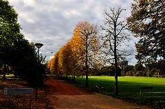 Walking Through The Door to Winter (iM@n) Tags: autumn sky green netherlands yellow nikon europe nederland thenetherlands eindhoven brabant hdr  d90 technischeuniversiteiteindhoven  nikond90
