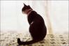 lazy cat & afternoon... (Twiggy Tu) Tags: film cat taiwan hippie taipei nikkor50mmf18 windowsill 2009 nikonfm2 moviefilm kodak250d bradtwiggyshome