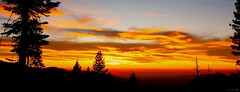 Sierra Sunset (the_tahoe_guy) Tags: travel pink sunset red wallpaper vacation favorite usa tree beautiful pine photography eos gold photo interesting colorful weekend creative commons creativecommons sierranevada mustsee  thetahoeguy