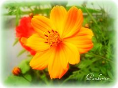 Feliz Quinta Flower!!! For you Dagmar