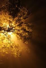 ** (maciej.ka) Tags: automne poland x pole lan polen otoo ba autunno polonia wroclaw pologne jesie  wrocaw breslau   polsko  puola poloni   polnia poljska  polandia              bellautunno lowesilesia natureinpoland