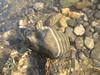 sassi di fiume
