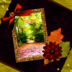 Fall collage (RIPizzo) Tags: trees red orange black flower green fall leaves yellow collage photography gold golden leaf rebecca path collection creation walkway fallen frame bushes pathway pizzo abigfave thebestofday gnneniyisi ripizzo wwwrebeccapizzocom wwwrebeccapizzophotocom
