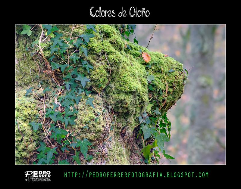 Ucieda - Colores de Otoño - Kdd Rincones de Cantabria