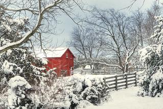 In seed time learn, in harvest teach, in Winter enjoy   ~William Blake