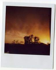 no pareces tu (estotoli) Tags: sol de polaroid arbol ventana arboles contraste puesta naranja oscuro barrotes