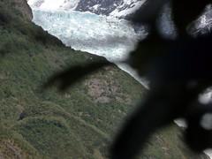 Franz Josef Glacier, NZ (The Shy Photographer (Timido)) Tags: newzealand nz franzjosefglacier aotearoa oceania shyish