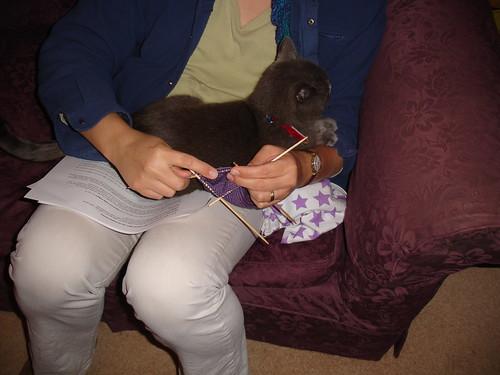 henrycat lends a paw (3)