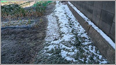残雪と芽吹き・・・