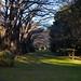 緑道の並木