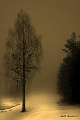 The Misty Day (markku mestila) Tags: greatphotographers anawesomeshot artofimages bestcapturesaoi yourwonderland sailsevenseas sailsevenseasmaster elitegalleryaoi