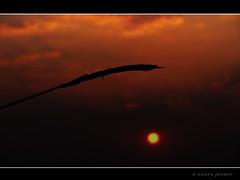 Reach Out (J Anand) Tags: sunset india andy nature sunrise landscape landscapes photographers cannon maharashtra pashan pune anand marathi amature memarathi idream sx110is janand marathichayachitrakar cannonsx110is marathiphotographers anandphotography anandjadhav