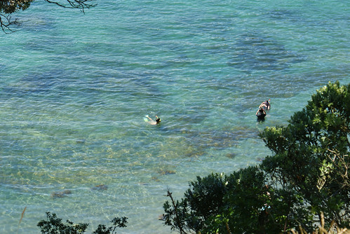 Goat Island Marine Reserve - 2