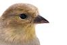 scratched (nosha) Tags: winter usa bird beautiful beauty birds newjersey outdoor wildlife nj feather mercer february avian mercercounty pennington 2010 lightroom f50 105mm blackmagic nosha 1320sec nikond300 1320secatf50