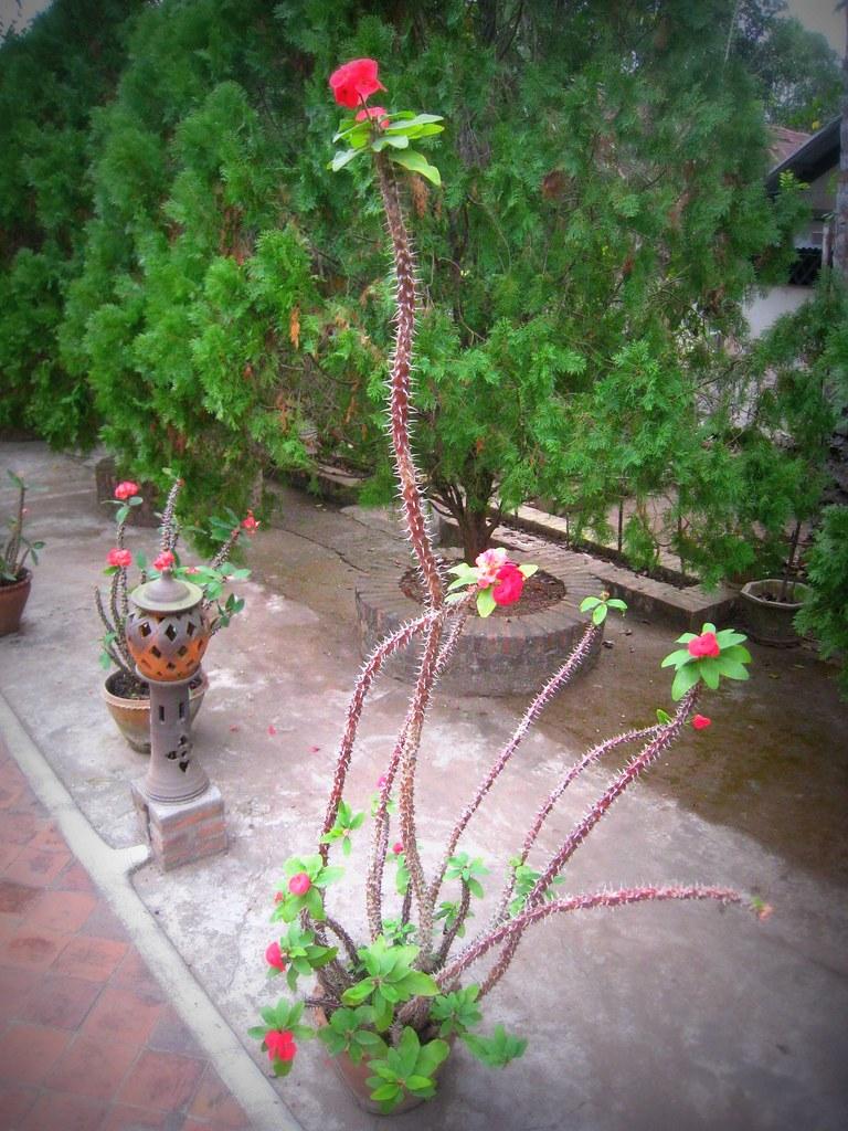 Jardin du Vat Choumkhong