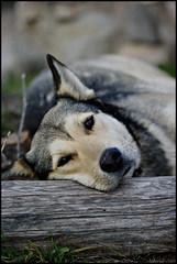Estic+cansat+%2F%2F+I+Feel+Tired