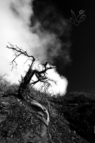 Dead Tree, Kawah Ijen