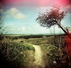 Wandering round Devil's Dyke (kitty b wonderful) Tags: camera light sky tree 120 film sussex holga spring cross path devils battery slide processing inside around dyke leak cfn rattling