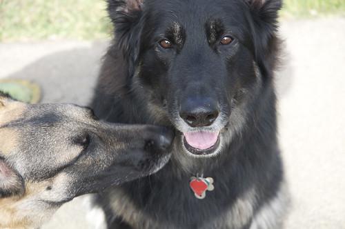 Argo & Stella