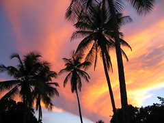 Palm Print (LifeLover4) Tags: sunset nature palms outdoors island paradise indian trinidad tropical caribbean tt carib windward tobago westindian trinidadtobago caribe westindies trinidadandtobago rainroom tobagonian 11degreesnorth lifelover4 stickneydesign