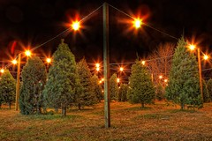 Christmas Tree Oh Christmas Tree (Matt Pasant) Tags: holiday nature night canon landscapes time personal lot hdr highdynamicrange chistmastree photospecs stockcategories canonef1635mmf28liiusm canoneos5dmarkii canon5dmkii