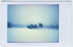 Silent Winter (Sachie Nagasawa - somewhair) Tags: winter snow film polaroid fuji belgium belgique hiver ardennes mini neige instantcamera pola instax sachie cheki nagasawa 20fav somewhair hantenshi