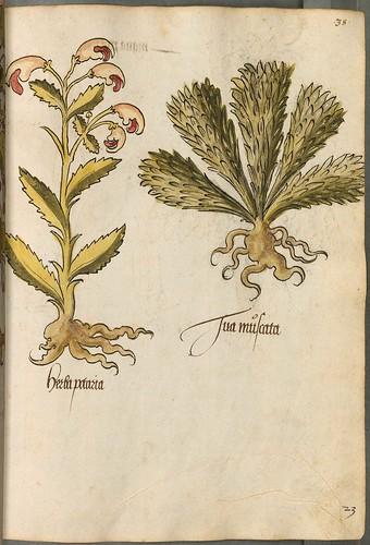 Arzneipflanzenbuch, 1525 j
