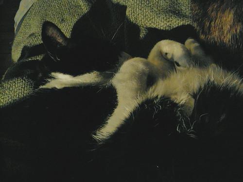 Sleepy Puff